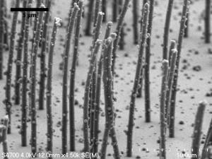 Cilii mucoasei nazale inglobati in stratul de mucus
