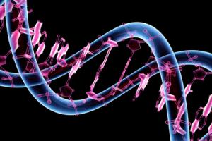 Cursuri de genetica in specialitatea ORL