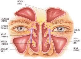 Mucocelul  sinusal